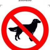 С собакой запрещено